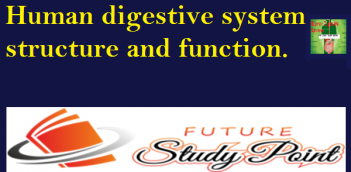 Human digestive system structure and function