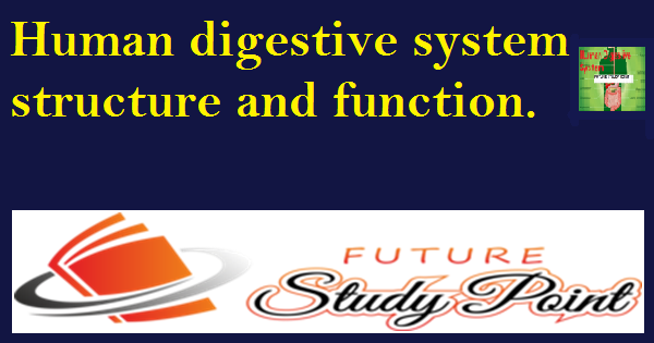 Human digestive system title