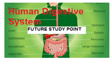 Digestive system im-1