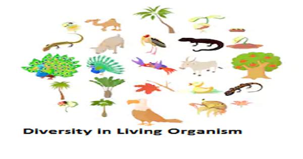 diversity in organisms