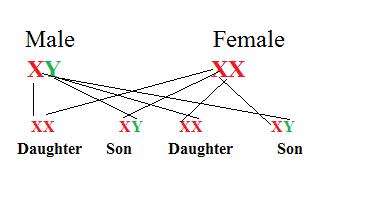 sex determine